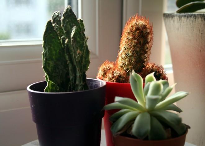 emilyannlou cactus