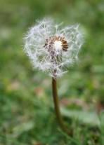 emilyannlou flower